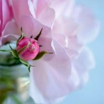 10 interesting facts about the color pink