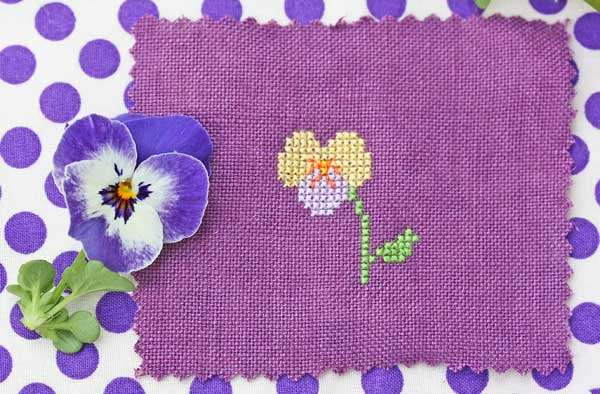 sweet pansy