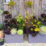 A collection of succulent plants in pretty planters.