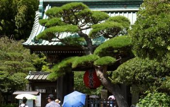 Die Tempel von Kamakura – Hasedera