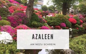 Azaleen-Festival am Nezu Schrein