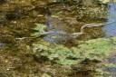 Schlange im Inokashira Park