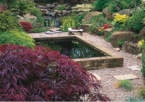 raise koi pond in your backyarad
