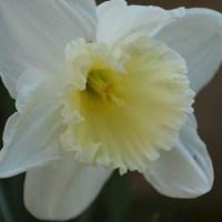 Le piccole gioie della primavera / Little joys of springtime
