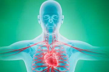 Венотонизирующее средство Детралекс влияние на артериальное давление показания и нюансы применения