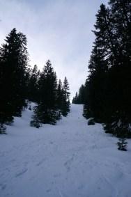 Steile Waldschneise © Gipfelfieber.com