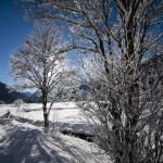 Bäume im Winterschlaf © Gipfelfieber.com