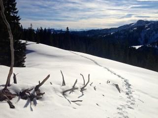 Spuren im Schnee © Gipfelfieber.com