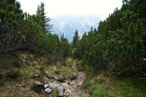 Steig durch die Latschen © Gipfelfieber.com