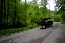 Pferdekutsche ©Gipfelfieber