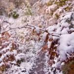 Winter am Panoramaweg ©Gipfelfieber