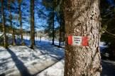 Dreiseenrundweg im lichten Wald ©Gipfelfieber