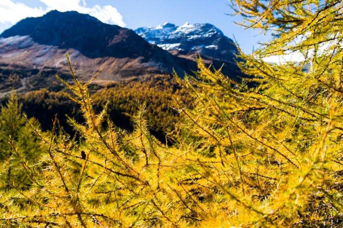 7 Tipps für sicheres Wandern im Herbst
