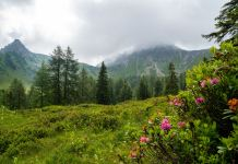 Rundtour über den Draugstein: Steinriese im Almenland ©Gipfelfieber