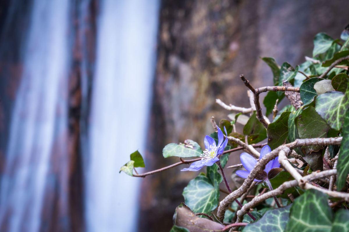 Durch die Rastenbachklamm: Frühlingsboten am Kalterer See