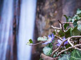 Durch die Rastenbachklamm: Frühlingsboten am Kalterer See ©Gipfelfieber