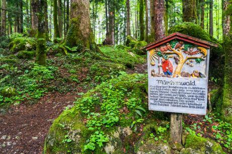 Märchenwald ©Gipfelfieber