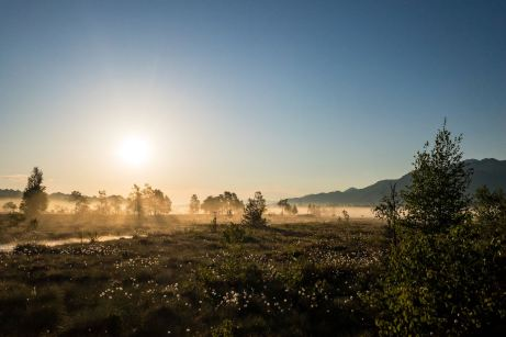 Sonnenaufgang im Moor ©Gipfelfieber