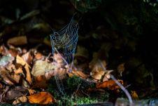 Spinnennetz ©Gipfelfieber