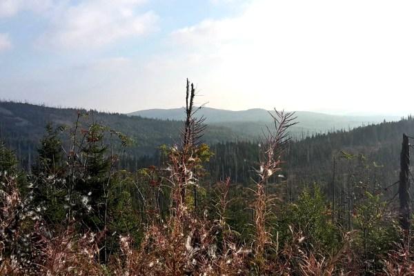 [Werbung] Bayerischer Wald: Ein Natur- und Kulturerlebnis