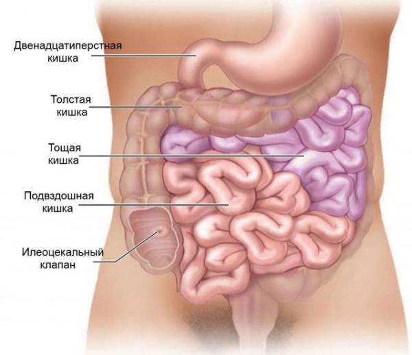 Что делать, если болит бок под ребрами справа: диагностика ...
