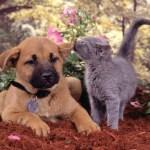 ペットにおススメのプレゼント。犬用、猫用にはどんなプレゼント??