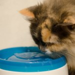 愛猫にプレゼント!うちの猫ちゃんに最適な食器選びの方法
