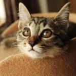 猫ちゃんに癒されたい人に贈る【2017年ねこカレンダー】特集