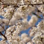 春爛漫!花見に持っていきたい!超お役立ちアイテム5選
