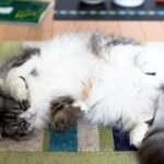 吾輩は暑いニャン!愛猫が喜ぶ夏のプレゼント♡