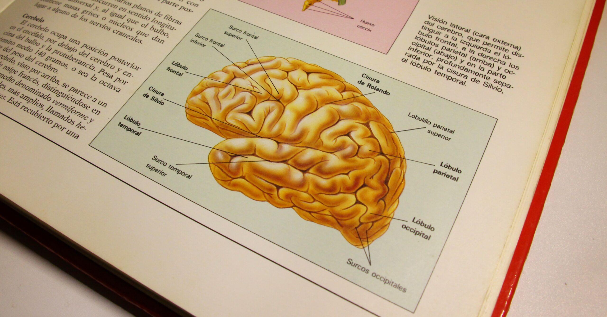 Begriffserklärung: Künstliche Intelligenz