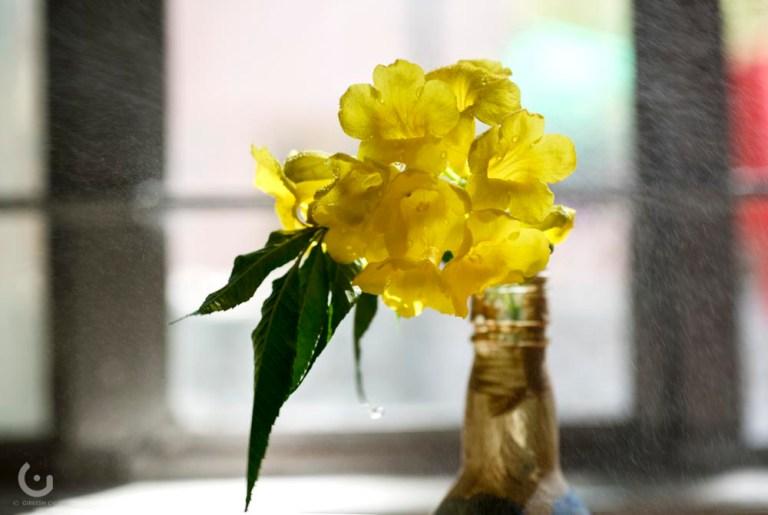 yellow flower_CD22004