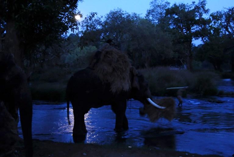 Mahut-elephant-30