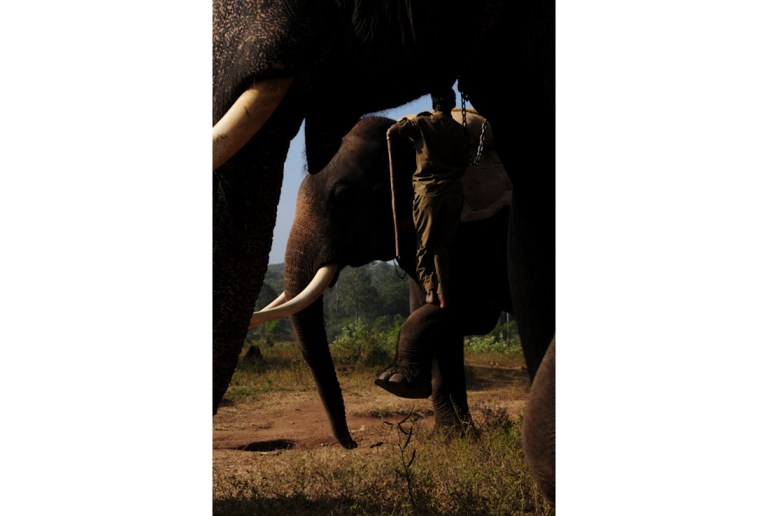 Mahut-elephant-9