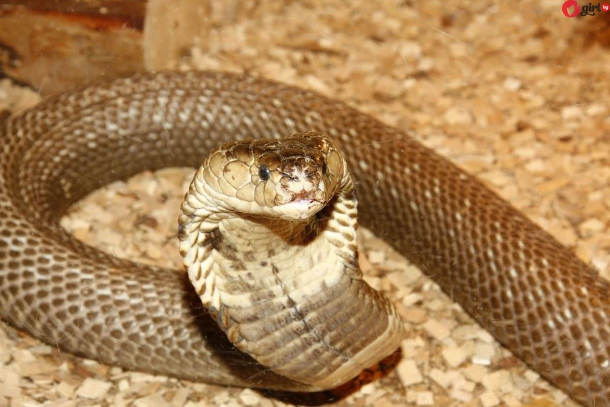 Само за жени: Вижте каква змия сте според датата на раждане!