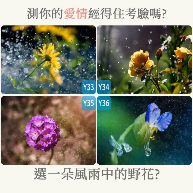 316_選一朵風雨中的野花,測你的愛情經得住考驗嗎_主圖.jpg