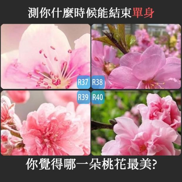 332_你覺得哪一朵桃花最美,測你什麼時候能結束單身_主圖