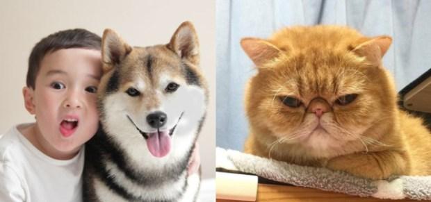 「貓奴」單身機率居然超高?!測測你是貓派還是狗派,兩種人格真是神對比呀!