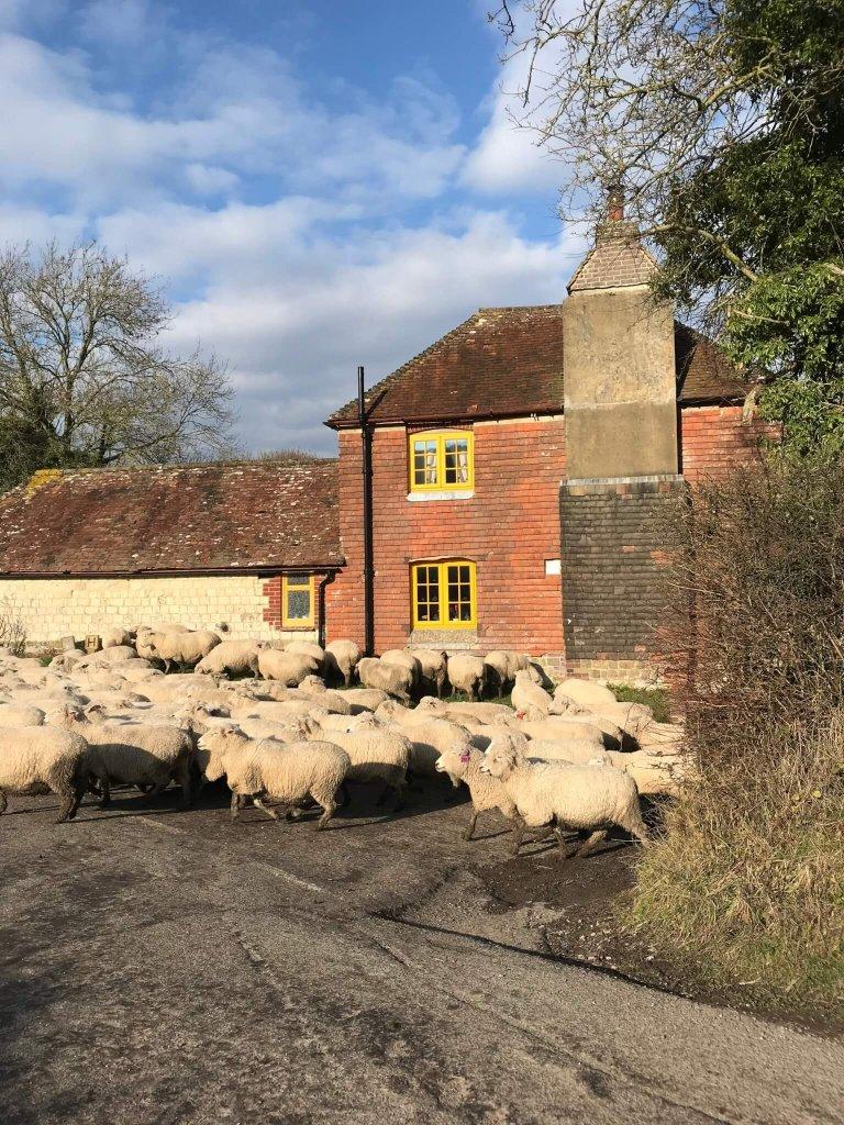 February 2018 on the farm…