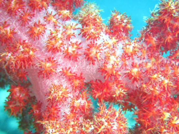 soft_coral_pink_blue