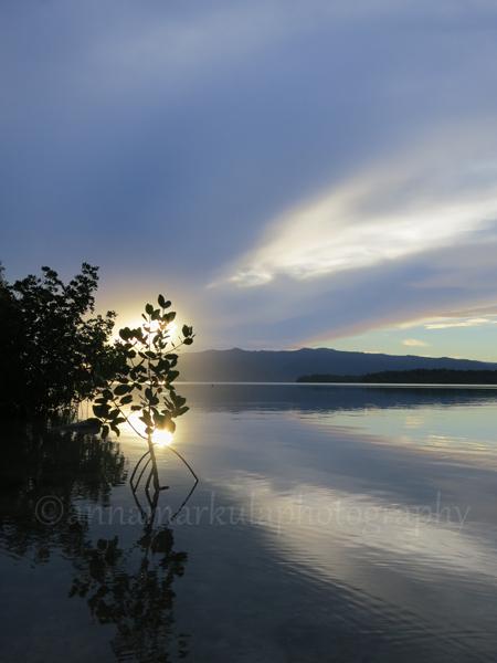 mangrove_sunset