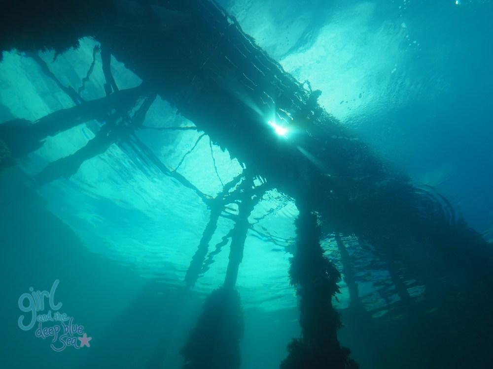 underwater Rapid Bay Jetty sunlight