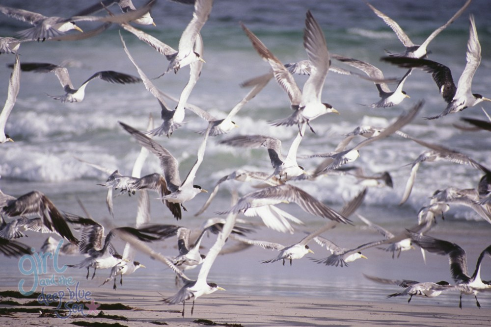 flock of terns flying beach