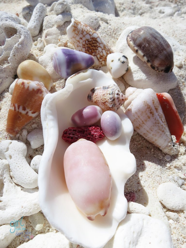 photograph of shells