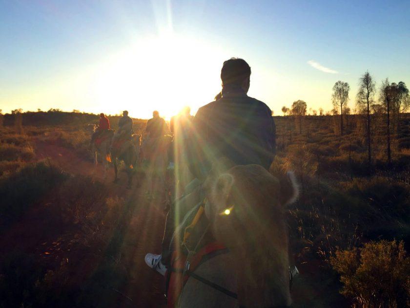 Sunrise Camel Ride at Uluru
