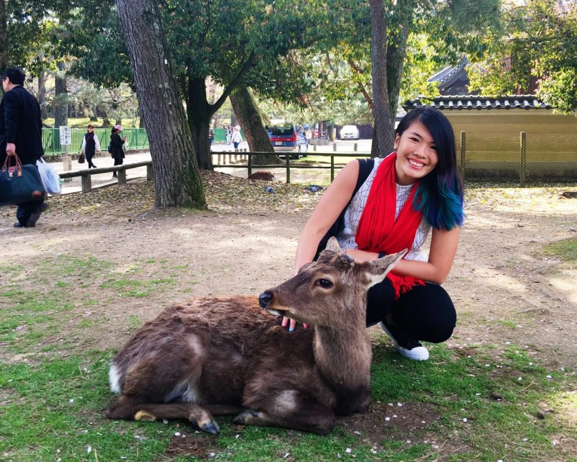 Playing with Sika deer in Nara