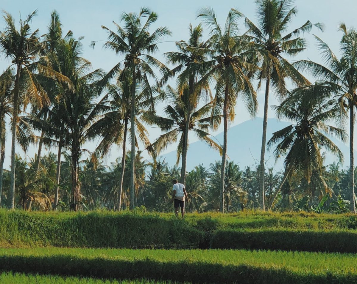 Guide to Ubud: A week in Bali's Rice Terrace Capital
