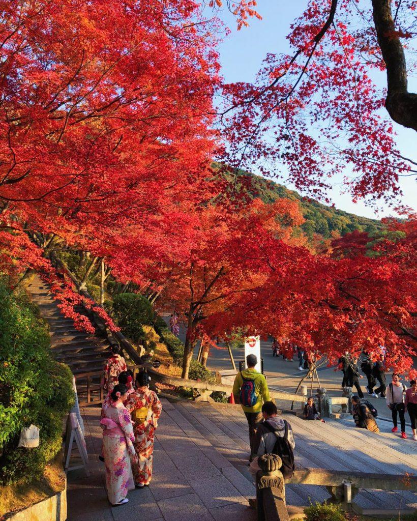 Vibrant red Momiji leaves in Kiyomizud-dera