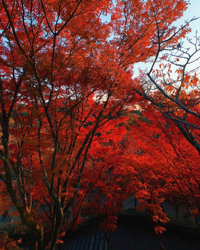 Momiji in Kiyomizu-dera in Kyoto
