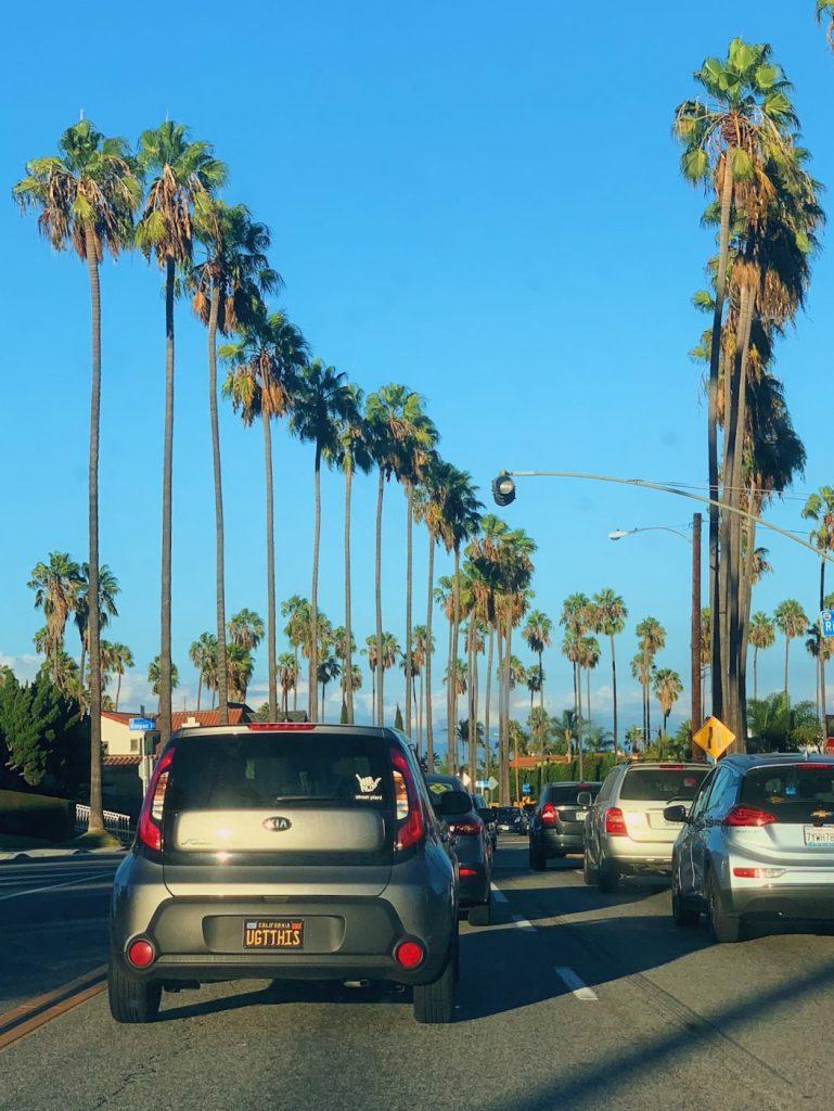 Palm Trees in LA